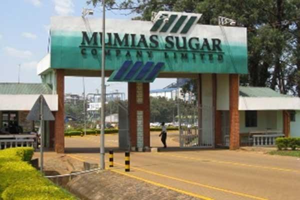 eLimu | Sugar cane in Kenya and Sudan