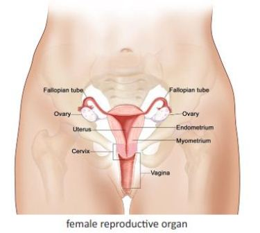 Mature nl menstral