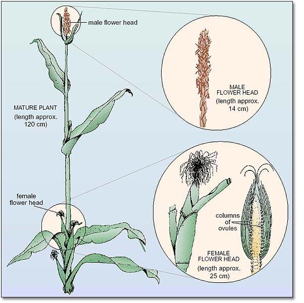 Elimu  Plants-6930