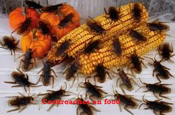 Can Food Poisoning Occur Instantly