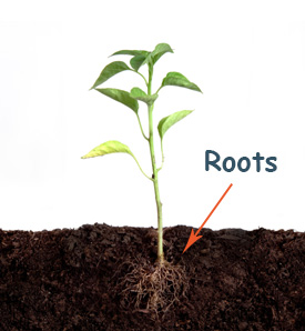 Roots Of Plants